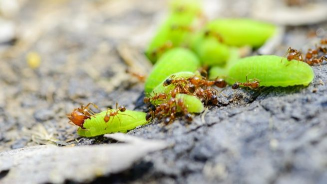 Fire ants or pest looking for food out near tires areas